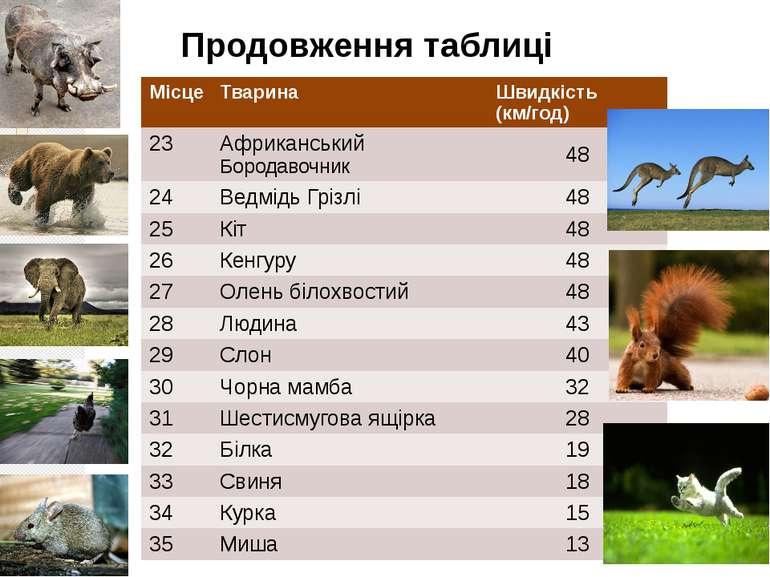 Продовження таблиці Місце Тварина Швидкість (км/год) 23 АфриканськийБородавоч...