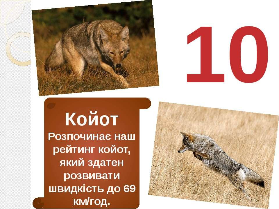 10 Койот Розпочинає наш рейтинг койот, який здатен розвивати швидкість до 69 ...