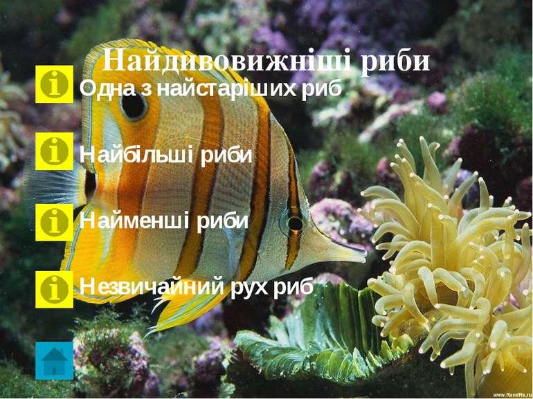 Латимерія Латимерія - єдиний нині живий представник загону целакантоподібних ...