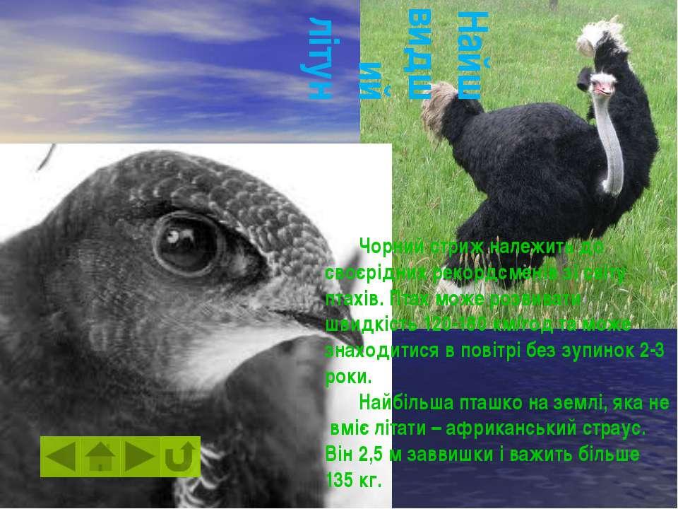 У світі є велика кількість птахів із яскравим та різнобарвним пірям. Серед ни...
