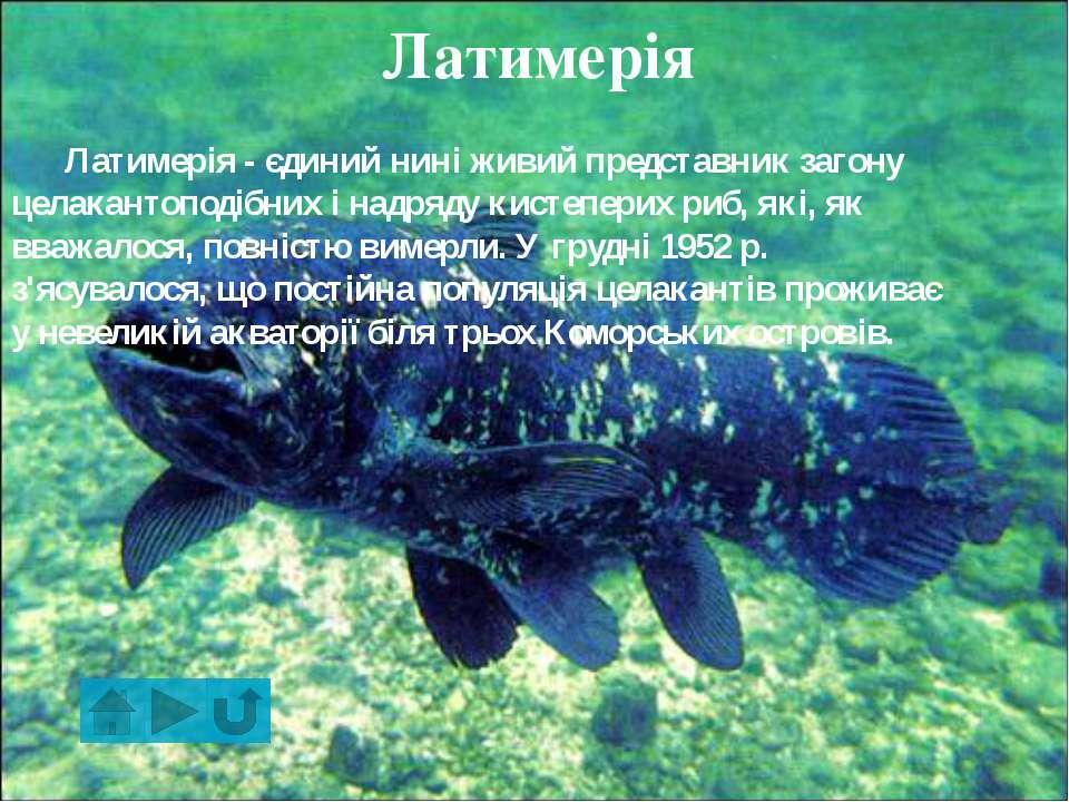 Найбільша риба в світі Це китова акула, що харчується планктоном. Найбільший ...
