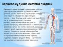 Серцево-судинна система людини Серцево-судинна системаголовним чином здійсню...