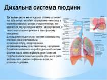 Дихальна система людини Ди хальна систе ма—відкрита системаорганізму, яка ...