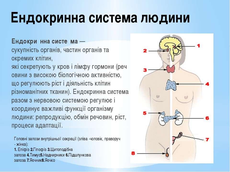 Ендокринна система людини Ендокри нна систе ма— сукупністьорганів, частин о...