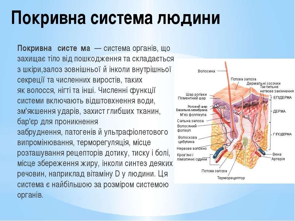 будови людини у фото на вікіпедії-щэ2