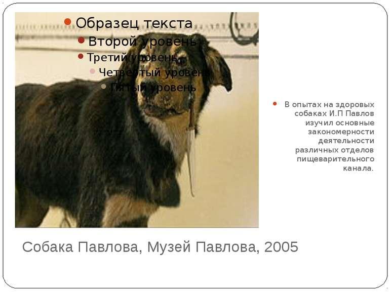 Собака Павлова, Музей Павлова, 2005 В опытах на здоровых собаках И.П Павлов и...