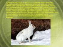 Взаключение стоит отметить, что многие виды животных, обитающих врайонах, г...