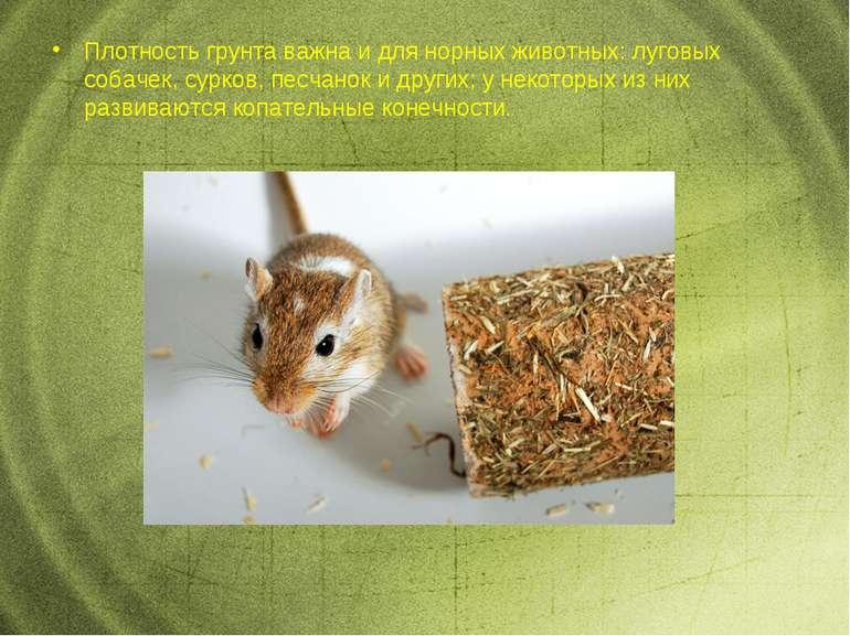Плотность грунта важна идля норных животных: луговых собачек, сурков, песчан...
