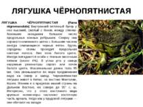 ЛЯГУШКА ЧЁРНОПЯТНИСТАЯ ЛЯГУШКА ЧЁРНОПЯТНИСТАЯ (Rana nigromaculata) Внутренний...