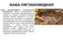 ЖАБА ЛЯГУШКОВИДНАЯ ЖАБА ЛЯГУШКОВИДНАЯ (Limnodynastes tasmaniensis) Широко рас...
