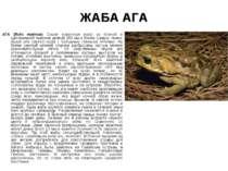 ЖАБА АГА АГА (Bufo marinus) Самая известная жаба из Южной и Центральной Амери...