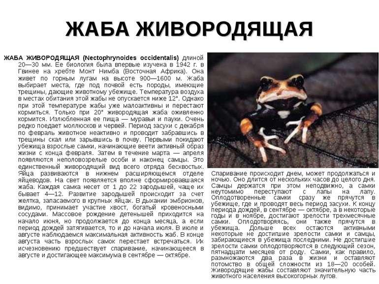 ЖАБА ЖИВОРОДЯЩАЯ ЖАБА ЖИВОРОДЯЩАЯ (Nectophrynoides occidentalis) длиной 20—30...
