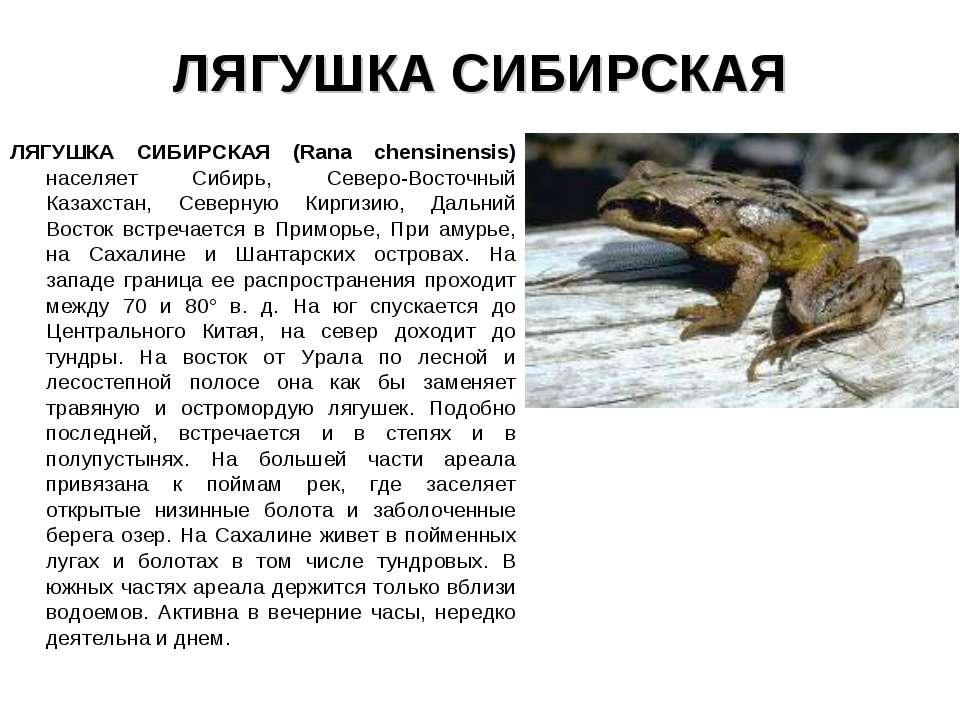 ЛЯГУШКА СИБИРСКАЯ ЛЯГУШКА СИБИРСКАЯ (Rana chensinensis) населяет Сибирь, Севе...