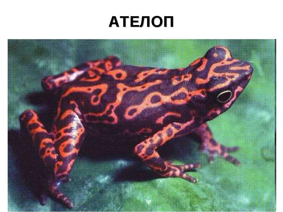 АТЕЛОП