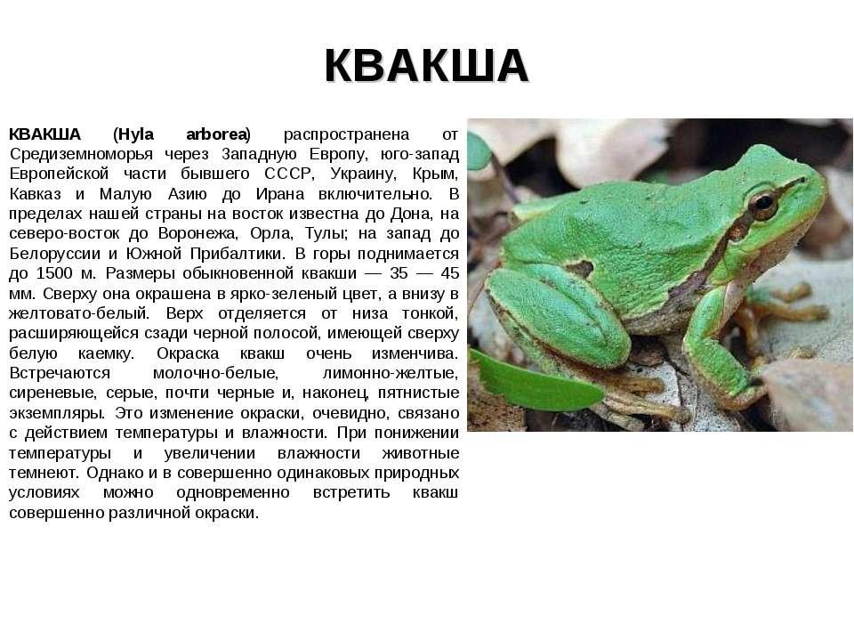 КВАКША КВАКША (Hyla arborea) распространена от Средиземноморья через Западную...