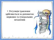 Регуляція травлення Регуляція травлення здійснюється за допомогою нервових та...