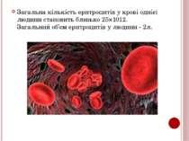 Загальна кількість еритроцитів у крові однієї людини становить близько 25×101...