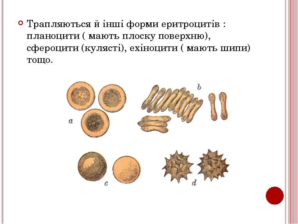 Трапляються й інші форми еритроцитів : планоцити ( мають плоску поверхню), сф...