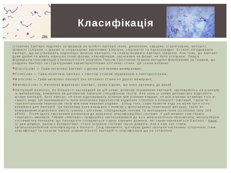 Історично бактерії поділяли за формою на кулясті бактерії (коки,диплококи,с...