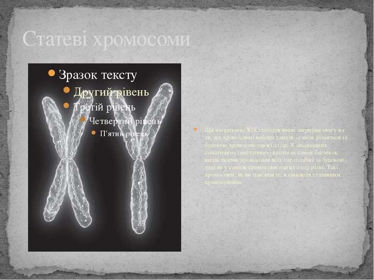Статеві хромосоми Ще наприкінці XIX століття вчені звернули увагу на те, що х...