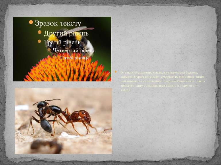 У таких суспільних комах, як медоносна бджола, джмелі, мурашки, самки утворюю...