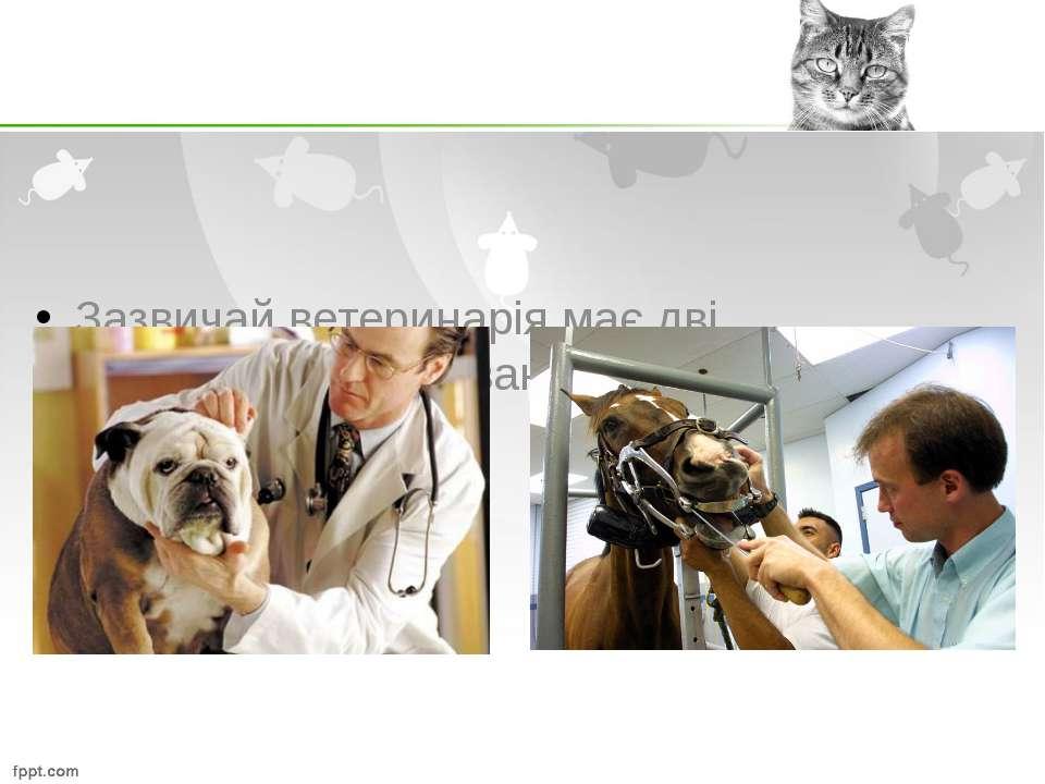 Зазвичай ветеринарія має дві спеціалізації - лікування дрібних і великих тварин.