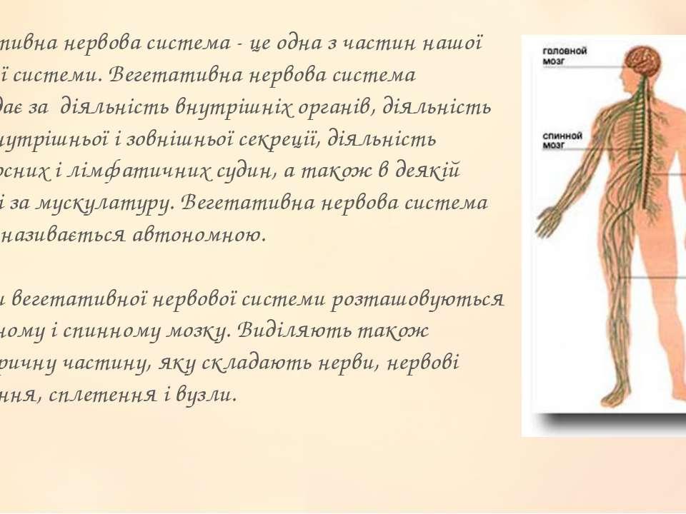 Вегетативна нервова система - це одна з частин нашої нервової системи. Вегета...
