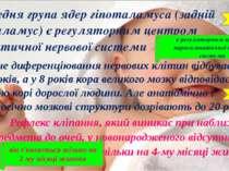 Передня група ядер гіпоталамуса (задній гіпоталамус) є регуляторним центром с...