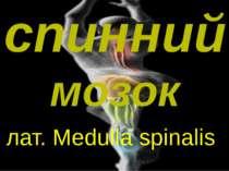 спинний мозок лат. Medulla spinalis