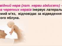 Відвідний нерв (лат. нерви abducens) - VI пара черепних нервів інервує латера...