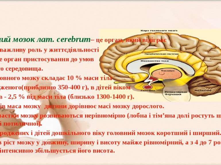 Головний мозок лат. cerebrum– це орган, який відіграє найбільш важливу роль у...