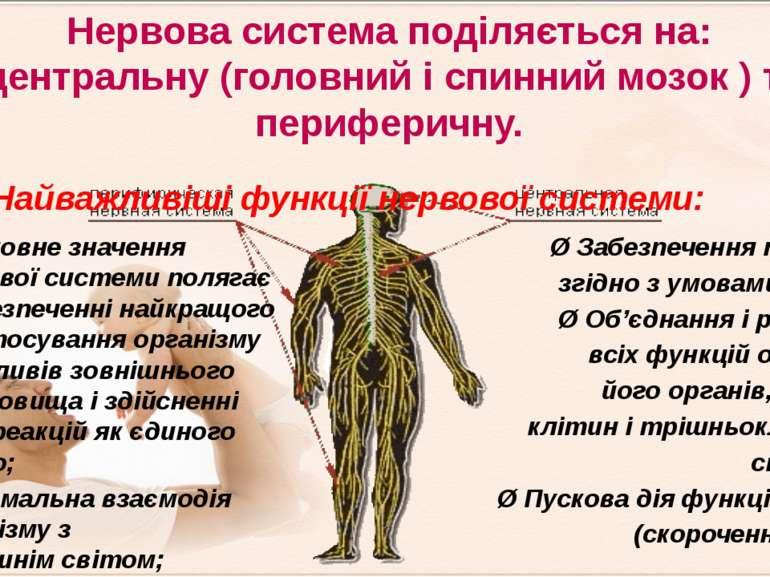 Нервова система поділяється на: центральну (головний і спинний мозок)та пер...