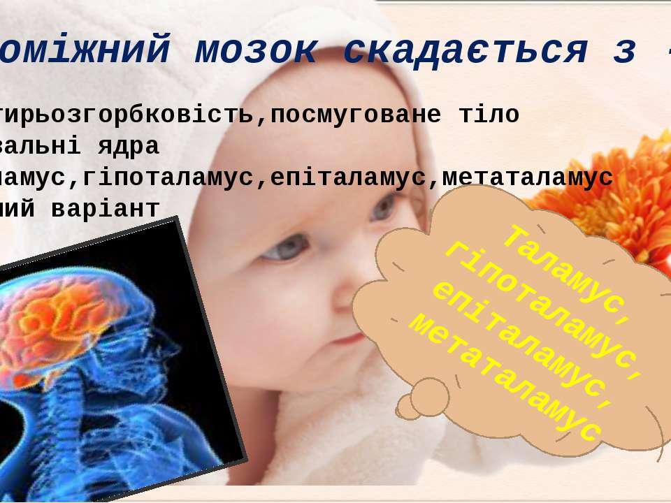 Чотирьозгорбковість,посмуговане тіло Базальні ядра Таламус,гіпоталамус,епітал...