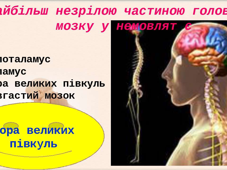 Кора великих півкуль Найбільш незрілою частиною головного мозку у немовлят є ...