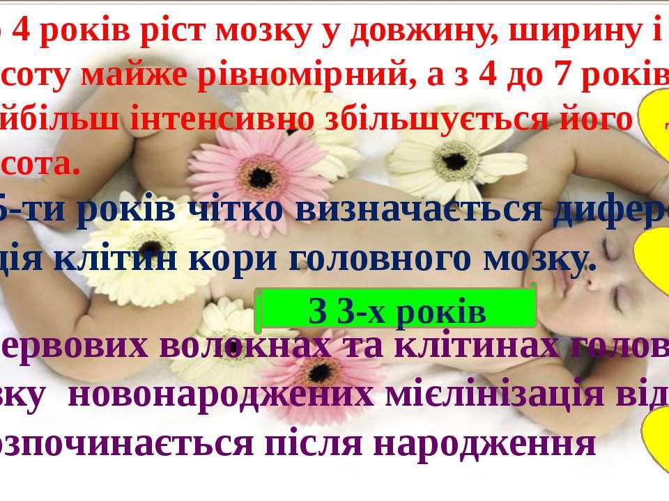 До 4 років ріст мозку у довжину, ширину і висоту майже рівномірний, а з 4 до ...