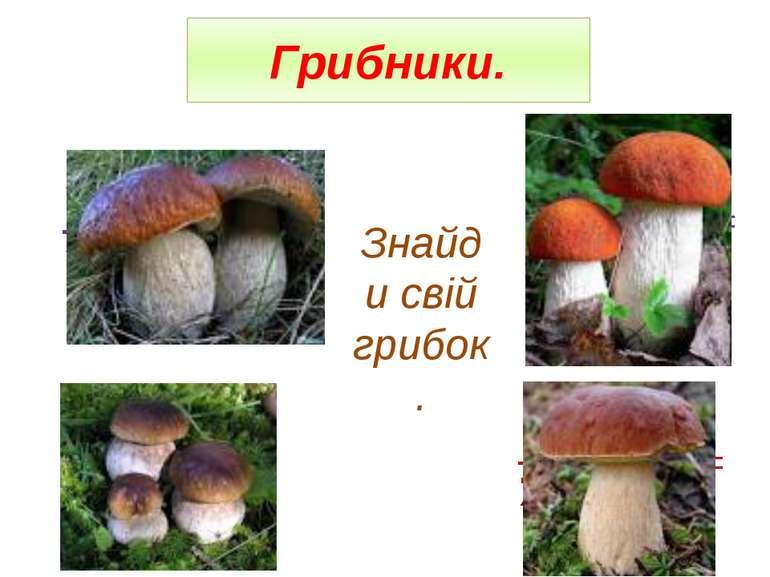 Грибники. Знайди свій грибок.