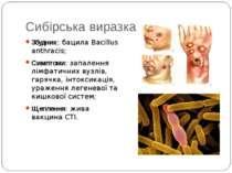 Сибірська виразка Збудник: бацила Bacillus anthracis; Симптоми: запалення лім...