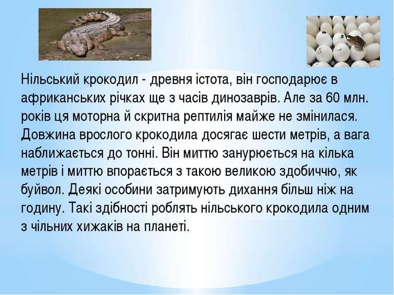 Нільський крокодил - древня істота, він господарює в африканських річках ще з...