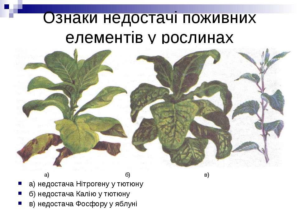 Ознаки недостачі поживних елементів у рослинах а) б) в) а) недостача Нітроген...