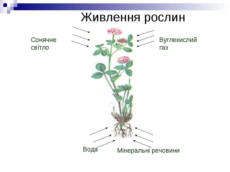 Живлення рослин Сонячне світло Вуглекислий газ Вода Мінеральні речовини