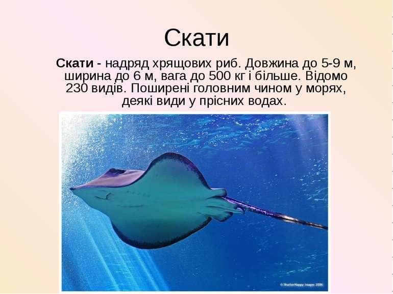 Скати Скати- надряд хрящових риб. Довжина до 5-9 м, ширина до 6 м, вага до 5...
