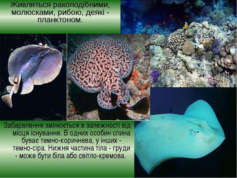 Живляться ракоподібними, молюсками, рибою, деякі- планктоном. Забарвлення зм...