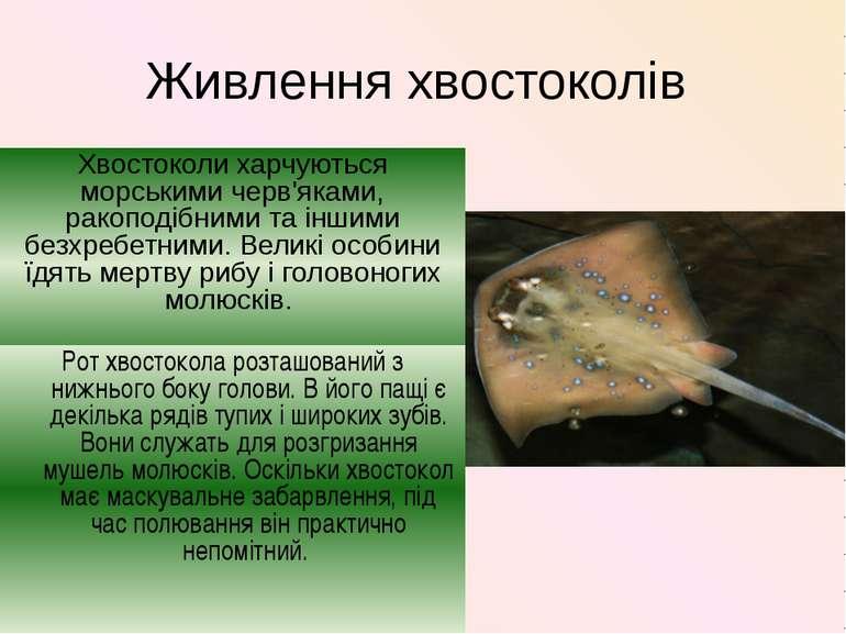 Живлення хвостоколів Хвостоколи харчуються морськими черв'яками, ракоподібним...