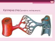 Капілярна сітка (артеріола, капіляр,венула)