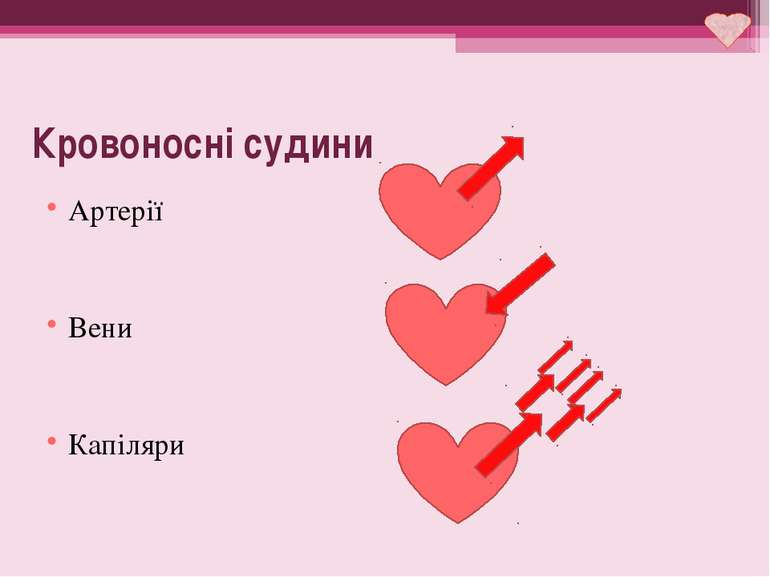 Кровоносні судини Артерії Вени Капіляри