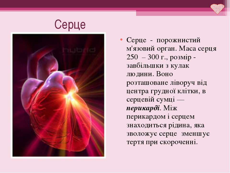 Серце Серце - порожнистий м'язовий орган. Маса серця 250 – 300 г., розмір - з...