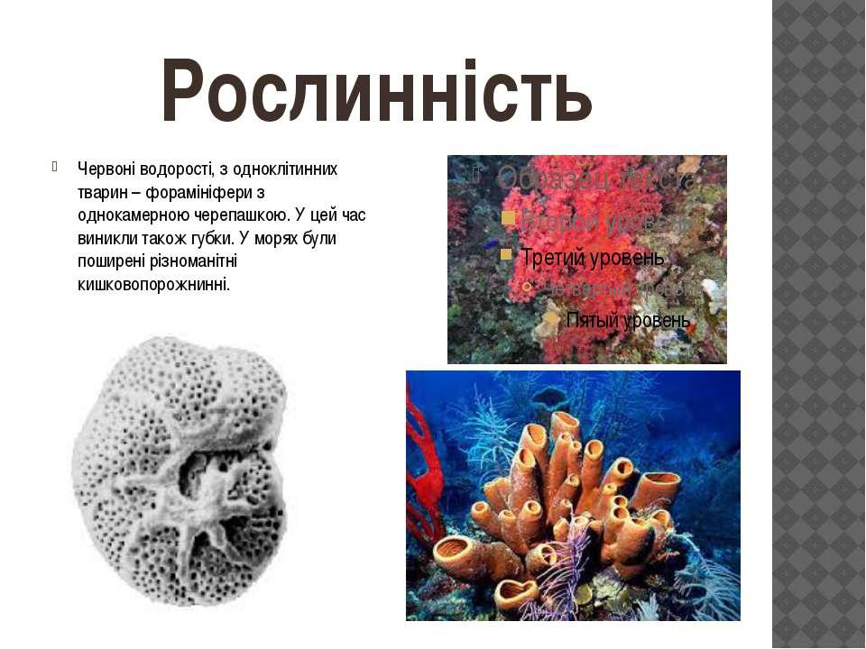 Рослинність Червоні водорості, з одноклітинних тварин – форамініфери з однока...