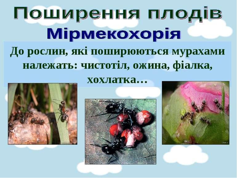 До рослин, які поширюються мурахами належать: чистотіл, ожина, фіалка, хохлатка…
