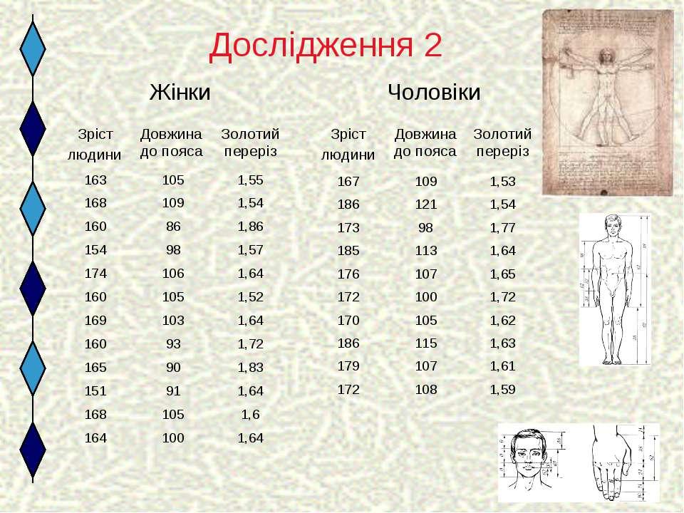 Дослідження 2 Жінки Чоловіки Зріст людини Довжина до пояса Золотий переріз 16...