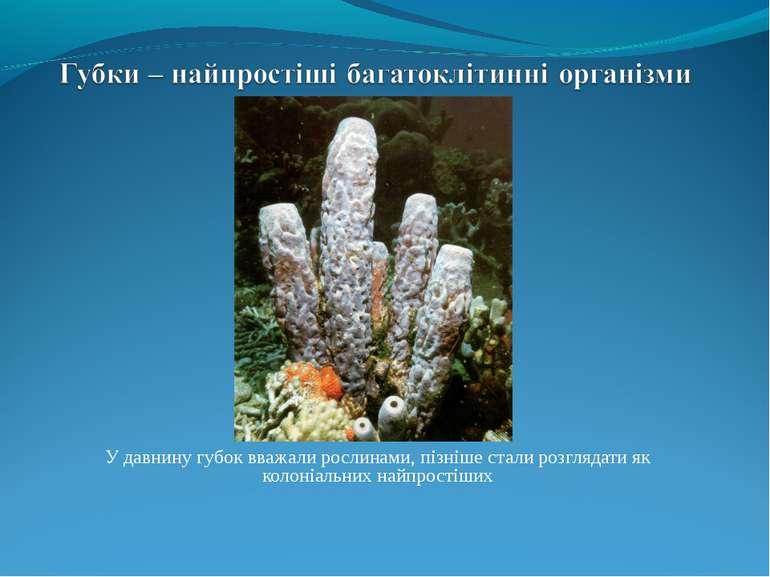 У давнину губок вважали рослинами, пізніше стали розглядати як колоніальних н...